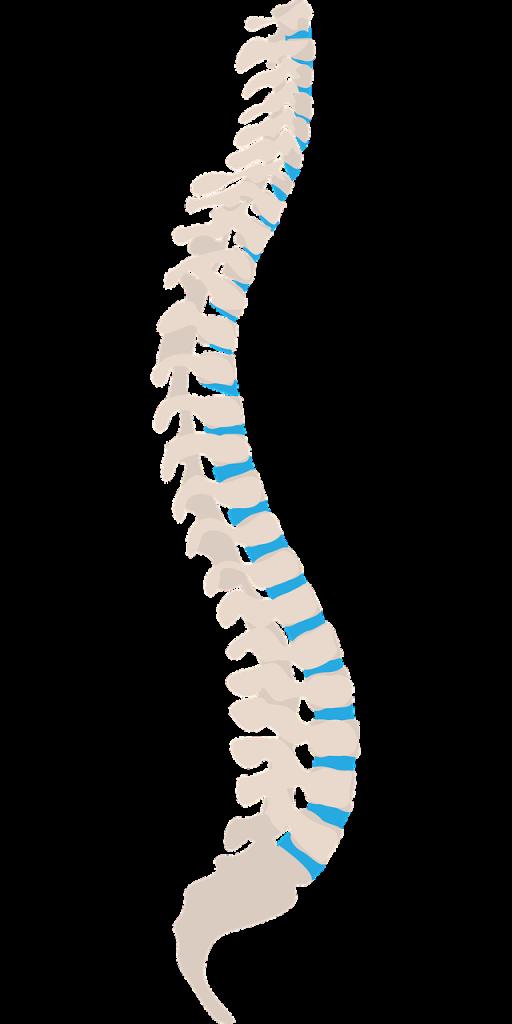 ruggengraat onderzoek rugpijn Alexander Techniek
